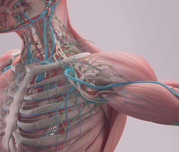 Lymph flow can be improved by lymphatic drainage technique