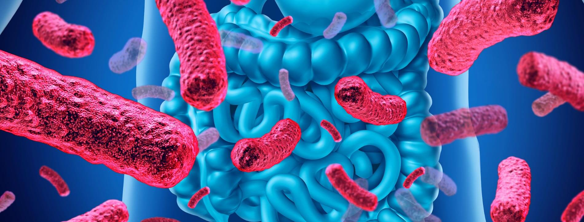 How Toxicity Affects Gut Microbiome